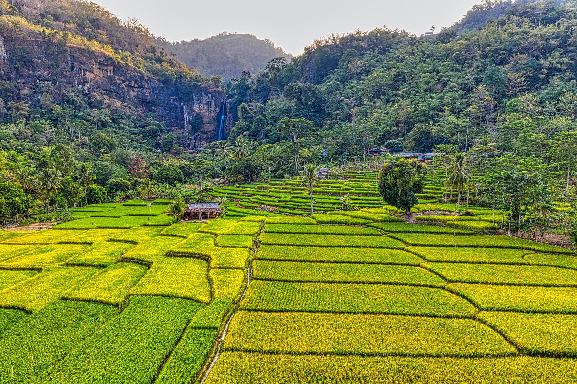 Photo of rice field terraces.